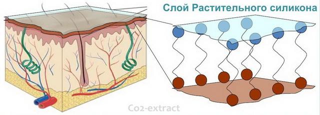 Растительный силикон silicone vegetal