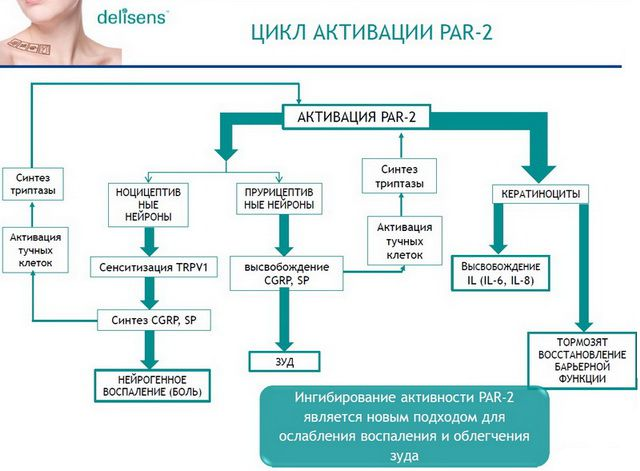 Delisens механизм действия