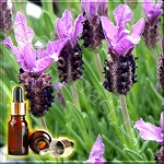 Лаванда французская Mailette эфирное масло (Lavender French Mailette Essential Oil)