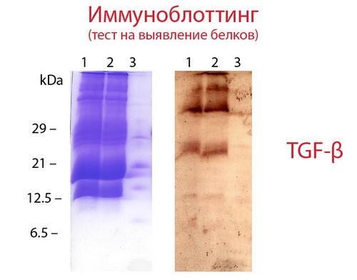 Milk peptide complex 2