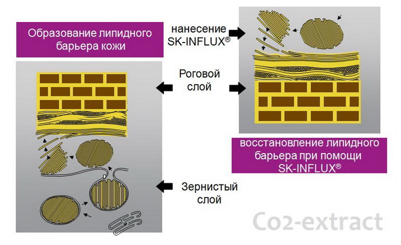 действие sk influx ceramide complex 2