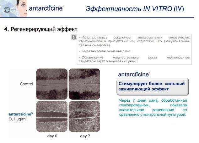 Antarcticine регенерирующий эффект