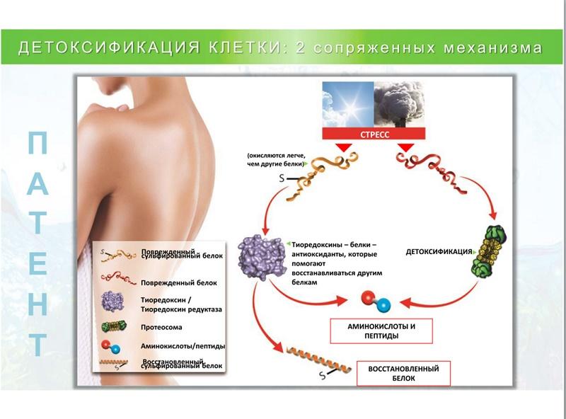 Биопланктон: морской планктон, феруловая кислота, аргинин