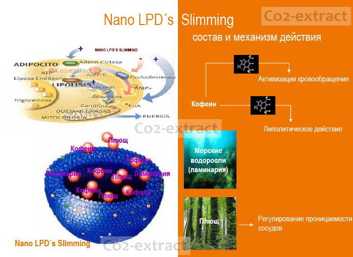 Механизм воздействия LPD's Slimming