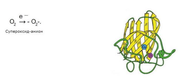 Супероксиддисмутаза