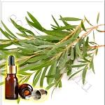 Чайное дерево эфирное масло (Tea Tree Essential Oil), ISO 4730-2017