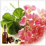 Герань египетская эфирное масло (Geranium Egyptian Essential Oil)