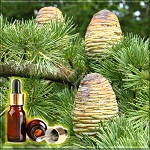 Кедр гималайский эфирное масло (Himalayan Cedar Essential Oil)