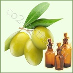Сверхкритический CO2 экстракт оливы листа (терпены 9%, полифенолы 1%, фитостерины 1%)