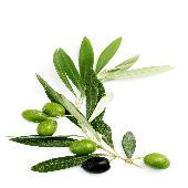 Oliveactive Omega (ОливАктив Омега) комплекс омега 3,6,9 кислот с гидрокситирозолом, маслиновой и олеонолевой кислотой