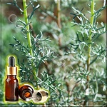 Полынь горькая эфирное масло (Artemisia absinthium Essential Oil), Германия