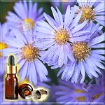Ромашка голубая эфирное масло (Chamomile Blue Essential Oil), Германия, 1 мл