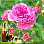 Роза иранская (дамасская) эфирное масло (Iranian Damask Rose Essential Oil)