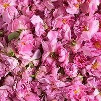 Роза дамасская абсолю (абсолют розы)