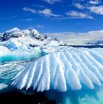 Antarcticine (Антарктицин)