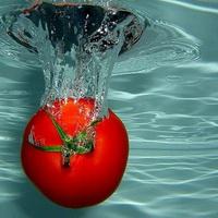 HYDROPOM (Гидропом) - энзимный гидролизат кожуры томатов