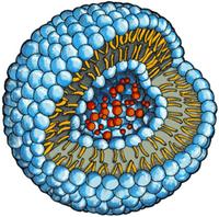 Troxerutin (Троксерутин) в липосомах